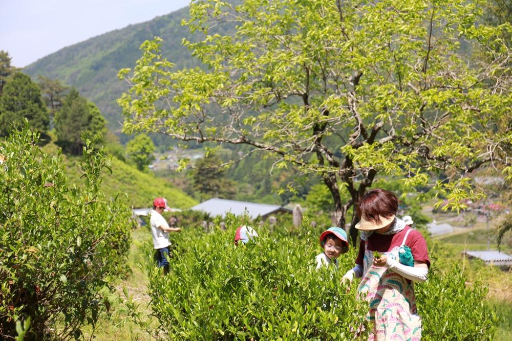 第3回活動レポート 「白川茶を五感で味わう!」